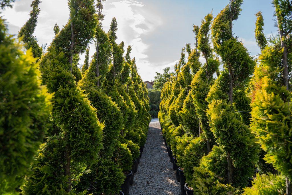 Produzione piante ornamentali