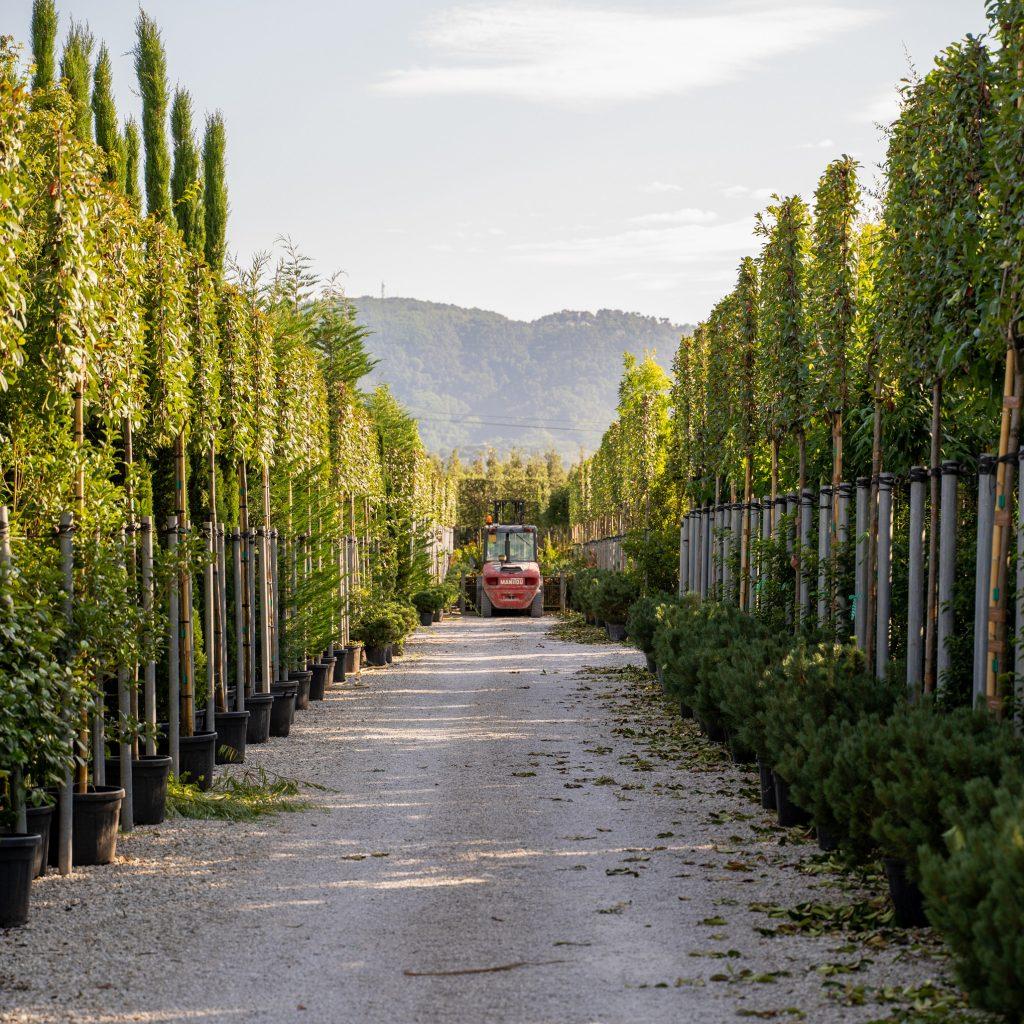 Produzione piante nei vivai a Pistoia