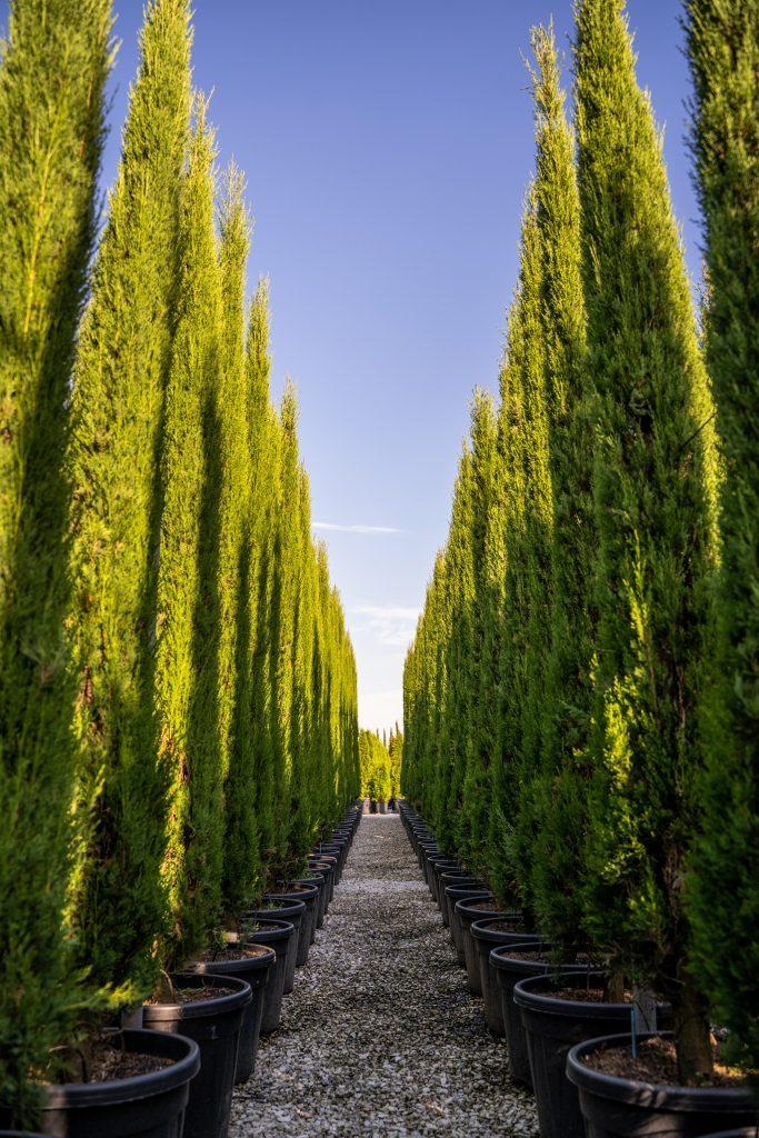 Vendita piante a paesaggisti