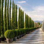 Produzione verde per architettura